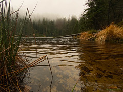 Wildsee beim Ruhestein