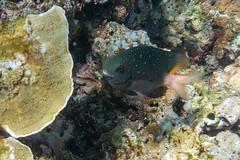 Underwater. Phuket isalnd, Thailand