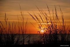 Veteran's Day morning 2....HFF!!! (Joe Hengel) Tags: veteransdaymorning rehobothbeach delaware de rehobothbeachde sussexcounty lsd waves water watchingthesunrise lowerslowerdelaware morning morninglight goodmorning sky clouds silhouette silhouettes fence dunes dunegrass sanddunes fenceline fencefriday hff friday happyfencefriday horizon atlanticocean seaside sea seashore seascape grass grasses beach beachocean beachgrass visitdelaware onlyindelaware