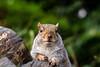 Squirrel 19-11-19 (25)