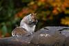 Squirrel 19-11-19 (7)