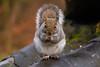Squirrel 19-11-19 (1)