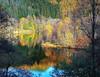 Loch Tummel Woodland