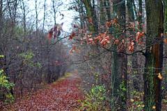 Late november nature (Dumby) Tags: landscape ilfov românia nature autumn fall outdoor forest trees colors