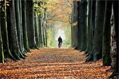 the man and his dog......... (atsjebosma) Tags: wood path leaves trees bos pad bomen bladeren autumn herfst 2019 atsjebosma colourful kleurrijk man dog hond licht light sun zon