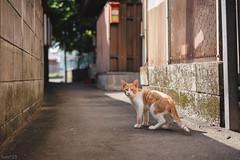 猫 (fumi*23) Tags: ilce7rm3 sony sel55f18z 55mm sonnartfe55mmf18za sonnar zeiss ソニー ねこ 猫 cat chat gato neko a7r3 animal alley street