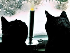 Snowday (Lana Pahl / Country Star Photography) Tags: happycaturday
