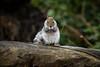 Squirrel 19-11-19 (43)