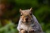 Squirrel 19-11-19 (22)