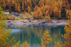 Colori d'autunno (stefano.chiarato) Tags: autunno lagodidevero alpedevero parcovegliadevero piemonte paesaggio landscape pentax pentaxk70 pentaxlife pentaxflickraward