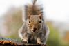 Squirrel 19-11-19 (20)
