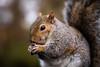 Squirrel 19-11-19 (14)