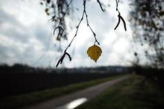 Blatt (tom-schulz) Tags: ricoh grii rawtherapee gimp berlin thomasschulz blatt herbst weg pfütze himmel wolken