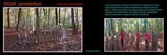 Se Connecter avec les arbres © Forêt verte 76 (philippedaniele) Tags: forêtverte forêt exposition dart oeuvresmonumentales créateurs créateurscontemporains seine maritime fabuleuse