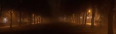 Uppsala, November 20, 2019 (Ulf Bodin) Tags: autumn sverige mist gunstaparken sweden outdoor panorama dimma gunstaplan gunstagatan tree träd park canonrf85mmf12lusm fog höst canoneosr uppsala urbanlife uppsalalän