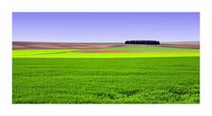 nationale 105 vers Vitry le François (jeanmichelchristian) Tags: paysage champagne champs arbres cultures couleurs