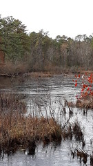Jackson, Nj (pclay923) Tags: ice frozen nj pinelands jackson water