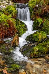 Mountain stream (mandyhedley) Tags: green nature waterfall lakedistrict mountainscape mountainstream moss whitewater