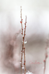 Rainy day (CecilieSonstebyPhotography) Tags: norway bokeh markiii macro rainyday raindrops closeup canon5dmarkiii bubble droplet water canon rain droplets white