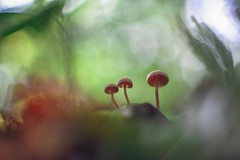 """Welcome down to paradise rock"" (Joe Effendi (Always Late!)) Tags: effendi fujix xt10 macro closeup nature natuur outdoor florafauna mushroom fungi pilze bokeh depthoffield dof petriccauto50mmf17 petri50mmf17 m42 vintagelens 50mm jeffbuckley november 2019 fall autumn herfst"