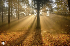 In search for the light (Robert Stienstra Photography) Tags: bos mist z50 nikon forest wood woods tree trees sun sunrise sunburst nature naturalforces landscape landscapes landscapephotography autumn fall season seasons dreamscape outdoor