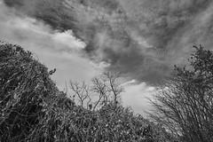 Clouds And Autumn Stuff In Monochrome (Modkuse) Tags: autumn autumnlandscape clouds cloudscape cloudy nature natural natureart art artphotography artistic artisticphotography photoart fineartphotography fineart acros acrossimulation fujiacros xh1acrossimulation redfilter sky skyscape dramaticsky intimatelandscape fujifilm fujinon fujifilmxh1 fujifilmxh1acrossimulation fujifilmxh1acros fujinonxf1655mmf28rlmwr xf1655mmf28rlmwr wideangle wideview captureone