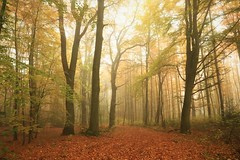 深秋森林晨幕 (hobb_zhao) Tags: morgens autumn herbst farbe color nature natur landschaft landscape lich light quiet ruhig wald tree germany morning outdoor