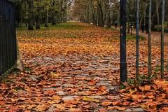 La grande allée... (Corinne OGNB) Tags: canon6dmarkii pavés trees arbres paysage landscape bois wood forêt forest nature automne autumn leaves feuilles allée