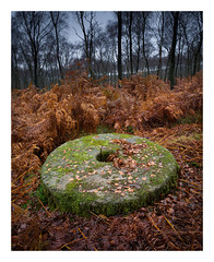 Another abandoned grindstone (fishyfish_arcade) Tags: gvariof35561260mm gx7 landscape longshaw lumix panasonic peakdistrict grindstone millstone autumn fall