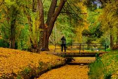 ATRAPADO EN LA PLASTICIDAD DEL OTOÑO (marthinotf) Tags: otoño canal arcasreales valladolis hojas arboles puente coloresdeotoño impresionismofotografico fotografiar salidafotografica