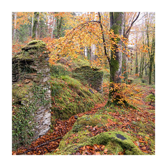 I D L E S S - R U I N S (sq crop) (Andrew Hocking Photography) Tags: idless woods truro cornwall monastery autumn trees leaves birch woodland fall fallen ruins old ancient ivy november uk england gb landscape moss orange red yellow fsc forestrycommission