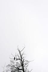 Yesvember (Dieversa) Tags: hazy dreamy soft softdreamyandethereal nature tree crow bird autumn fall november yesvember dream lensbaby odessa ukraine odesa ethereal abstract