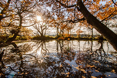Pond Life (ianbonnell) Tags: pond billinge sthelens merseyside water trees autumn fall seasons reflections