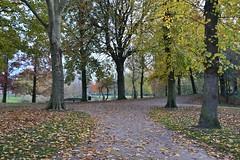 Vlaardingen (Hugo Sluimer) Tags: nikon nikond500 d500 vlaardingen zuidholland holland nederland natuur nature natuurfotografie natuurfotograaf naturephotography herfst