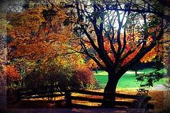 Autumn's Colours (Marcia Portess-Thanks for a million+ views.) Tags: lanaturleza nature visualart multimedia photoart photomanipulation effects painted serene amarillo rojo verde arboles vista view lawn minigolfcourse parque park gold green yellow red trees fallcolours autumn canada bc vancouver stanleypark marciaaportess marciaportess map autumn'scolours