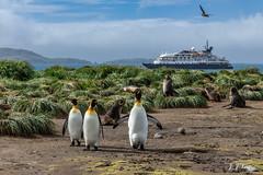""""""" Trio """" (JJSantosphoto) Tags: jjsantos jjsantosphoto travel viagem viagens canoneos1dx canon eos1dx eos pinguimimperador imperador pinguim foca praia navio barco mar passaro expedição expediçãoantartica antartica antartida antarctica ilhageorgiadosul"""