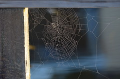 Oh What A Tangled Web We Weave... (Neal D) Tags: bc abbotsford milllake web spiderweb