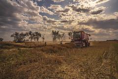 Canola harvest done (Bev-lyn) Tags: harvest canola landscape fields machinery sky australia