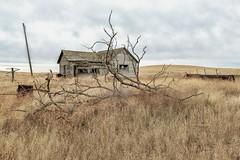 (garshna) Tags: homestead abandoned tree sky grass pole clothesline clouds equipment farm