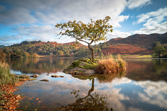 Standing on my own (Coless66) Tags: rydal lakedistrict lonetree clouds grasmere autumn holiday reflections daysout z6 nikon 2470mm cumbria scenic mind mindfulness minibreaks beautiful treescape colours lizcolesphotography lizcoles lizlightscameraaction longexposure le