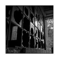 window • turckheim, alsace • 2019 (lem's) Tags: broekn window glass verre cassé ruine ruin factory usine urbex turskheim alsace rolleiflex t
