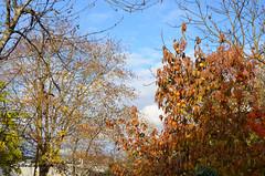 """branches d'automne (Brigitte .. . """"Tatie Clic"""") Tags: 2018111328 novembre automne arbres branches contreplongée paysage ciel nuages"""