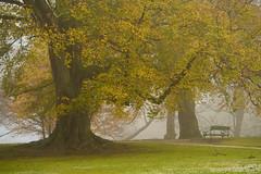 (Ernst_P.) Tags: aut innsbruck österreich schlossparkambras tirol nebel baum herbst samyang walimex 135mm f20 autumn fall otoño austria autriche tyrol fog niebla