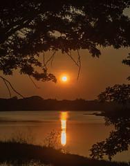 Reflection (Bhuvan N) Tags: evening sunset sun water reflection lake kukkarahallilake mysore mysuru travel india karnataka outside outdoors outing sky light trees orange yellow nature naturephotography silhouette