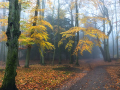 Last leaves (Zoom58.9) Tags: forest trees leaves way autumn park nature landscape outside fog wald bäume blätter weg herbst natur landschaft draussen europe europa germany deutschland bremerhaven sony sonydscrx10m4 nebel
