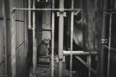 猫 (fumi*23) Tags: ilce7rm3 sony sel35f18f emount 35mm fe35mmf18 a7r3 animal alley cat chat gato neko katze bw blackandwhite monochrome ねこ 猫 ソニー