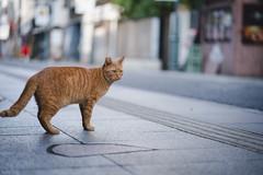 猫 (fumi*23) Tags: ilce7rm3 sony sel85f18 85mm emount fe85mmf18 feline a7r3 animal cat gato katze neko bokeh depthoffield dof ねこ 猫 ソニー