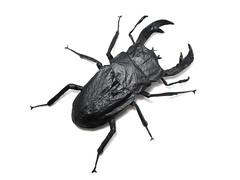 Dorcus Curvidens - Brian Chan (Mariano Zavala B) Tags: dorcus curvidens origami beetle chan brian tutorial