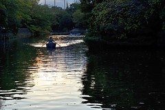 Slow and steady (Abhay Parvate) Tags: lake water reflection boat canoe sunset goldenhour nature landscape weekend leisure musashisekipark 武蔵関公園