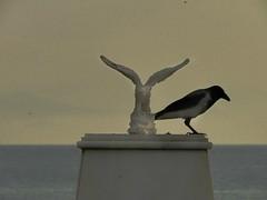 the true and the fake (panoskaralis) Tags: raven crow bird blackbird marble marblestatue nikoncoolpixb700 nikon nikonb700